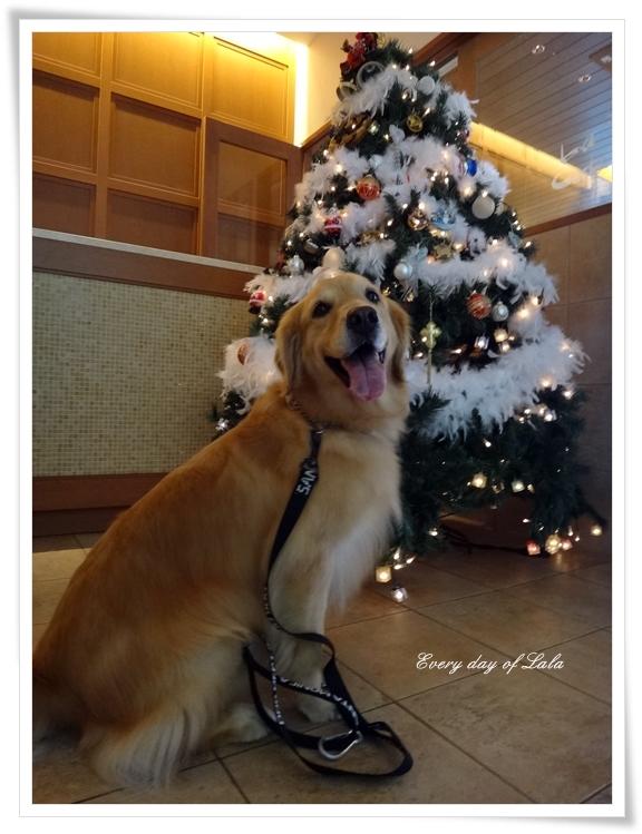 クリスマスツリーの前201412