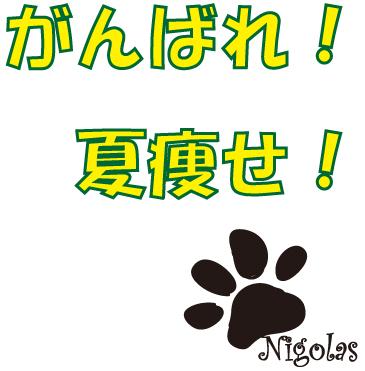 nico-2.jpg