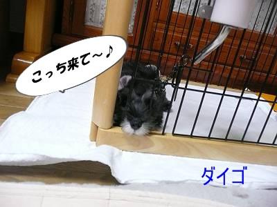 ダイアンっ子ダイゴ9月11日-s