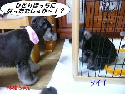 林檎ちゃん9月18日2-s