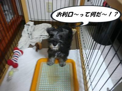 ダイアンっ子ダイゴ9月20日1-s