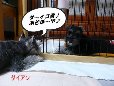 ダイアンっ子ダイゴ9月20日3-s