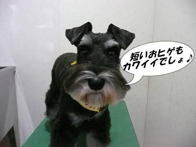 チャッピーちゃん9月22日1-s