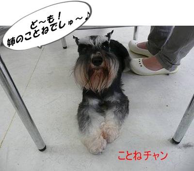 ことねチャン10月9日-s