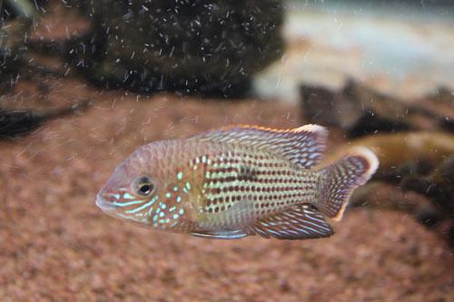 グリーンテラー 東海 岐阜 熱帯魚 水草 観葉植物販売 Grow aquarium