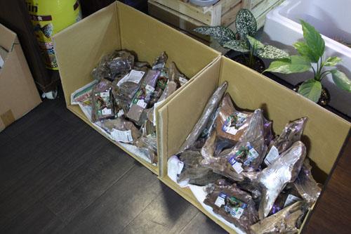 流木入荷 東海 岐阜 熱帯魚 水草 観葉植物販売 Grow aquarium