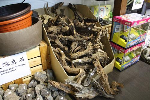 ADA ホーンウッド入荷 東海 岐阜 熱帯魚 水草 観葉植物販売 Grow aquarium