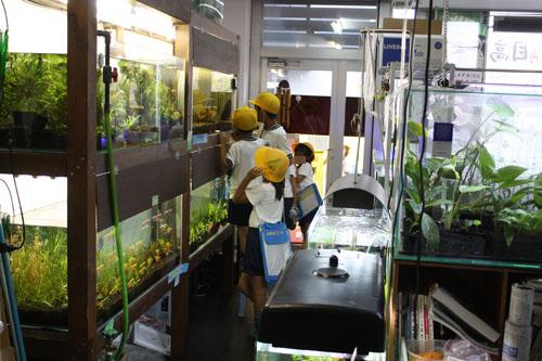 お店たんけん 東海 岐阜 熱帯魚 水草 観葉植物販売 Grow aquarium