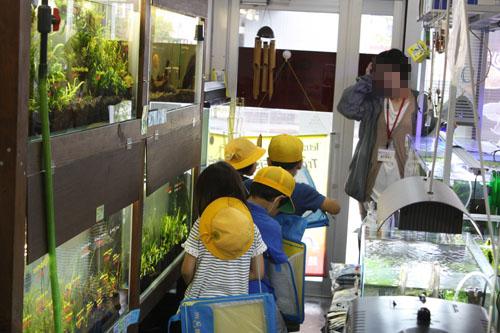 小学生 お店たんけん 東海 岐阜 熱帯魚 水草 観葉植物販売 Grow aquarium