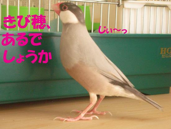 京(^_^;)