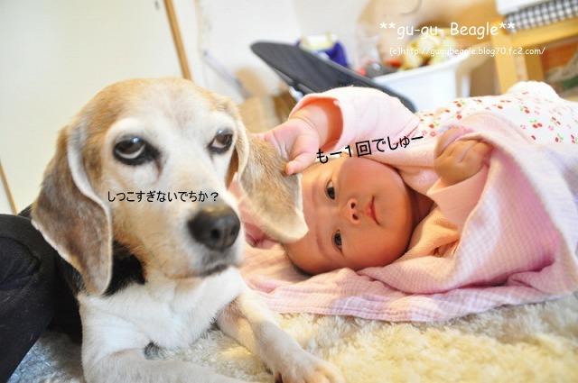 12_20120504225647.jpg