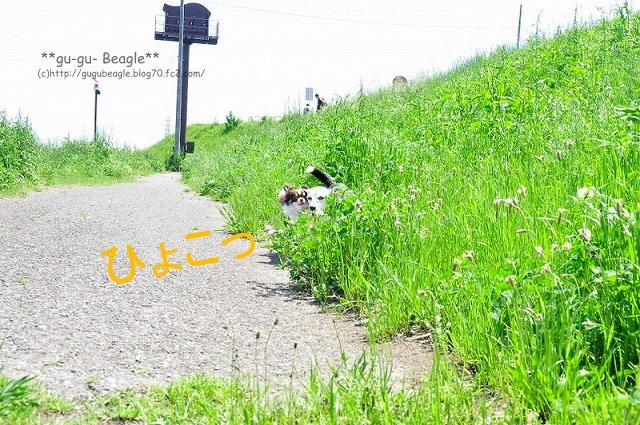 1_20120505233614.jpg