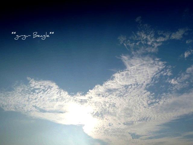 1_20120730091908.jpg