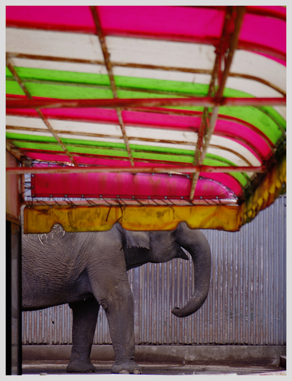 colorful elephant blog