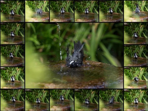 水浴び(2)