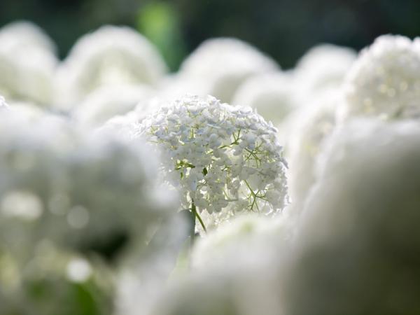 白雪の中に咲く・・・