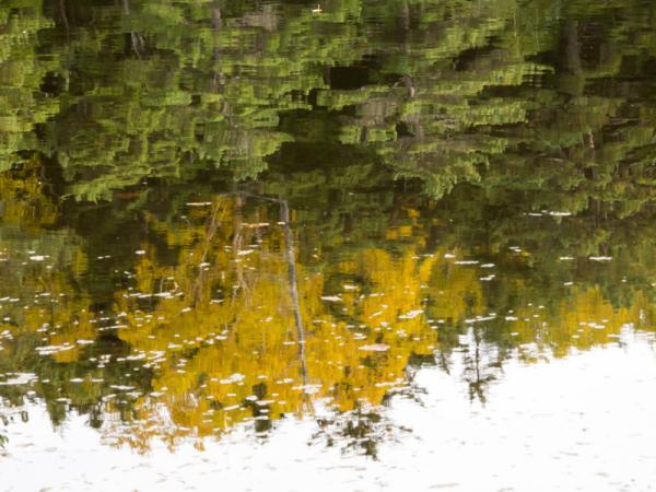 湖面を彩る紅葉(2)