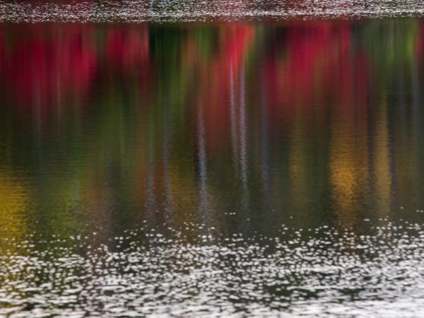 湖面を彩る紅葉(1)