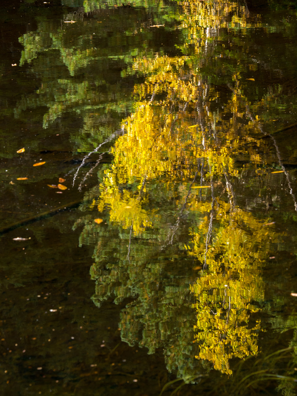 湖面を彩る紅葉(5)