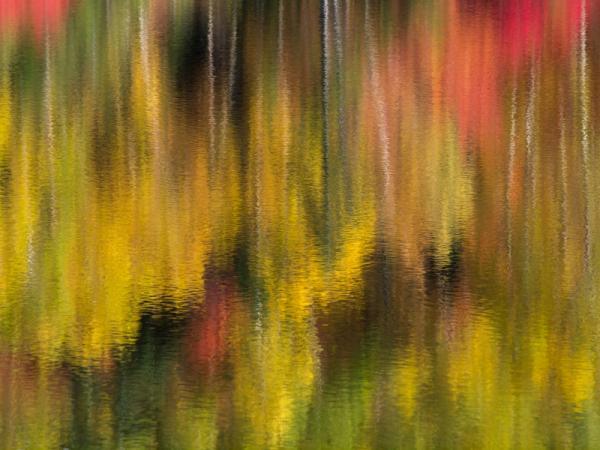 湖面を彩る紅葉(4)