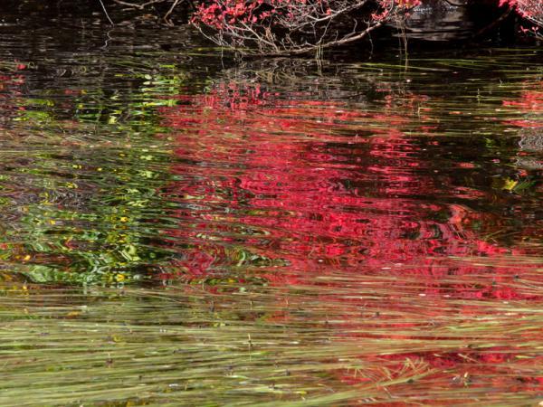 湖面を彩る紅葉(3)