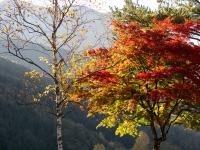 広瀬湖近辺の紅葉(4)