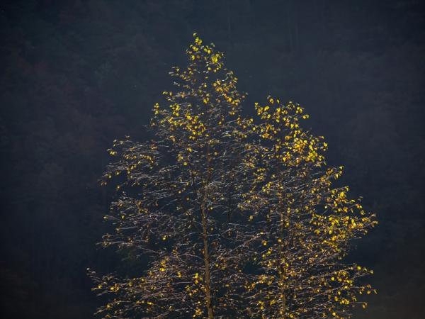 滝川渓谷の紅葉(1)