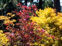 三峯神社の紅葉(2)