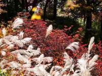 三峯神社の紅葉(4)