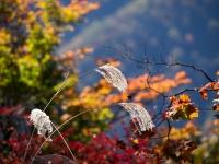 三峯神社の紅葉(5)