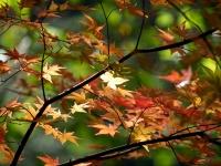 西沢渓谷の紅葉(2)