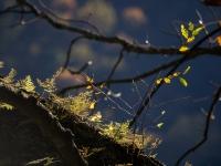 西沢渓谷の紅葉(4)