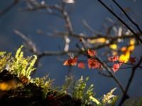西沢渓谷の紅葉(5)