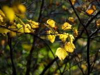 西沢渓谷の紅葉(6)