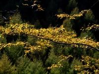 西沢渓谷の紅葉(7)
