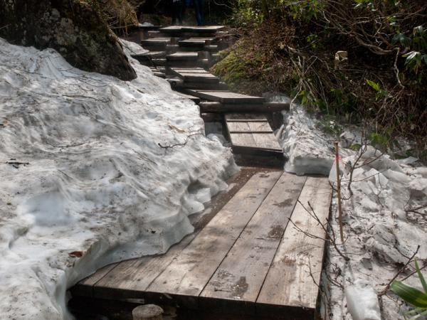 栂池自然園の残雪