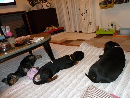3ワン寝1