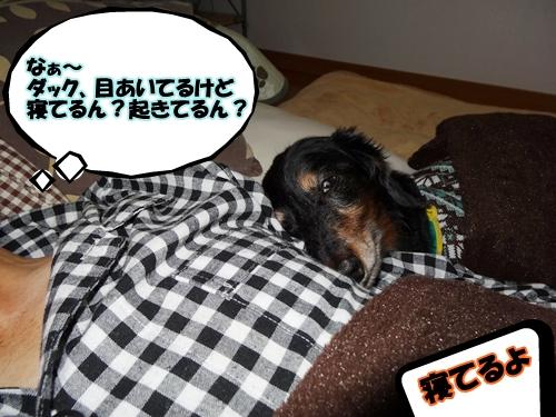 寝てるよ!