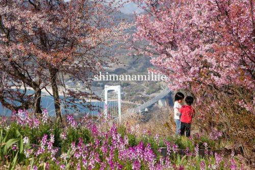 shimanami2362.jpg