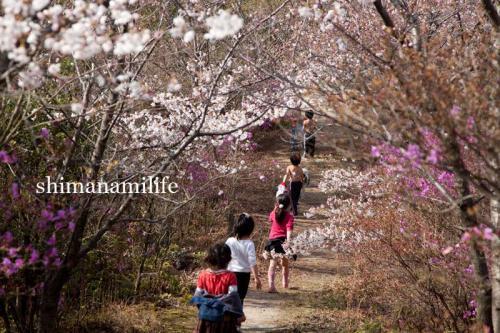 shimanami2530.jpg