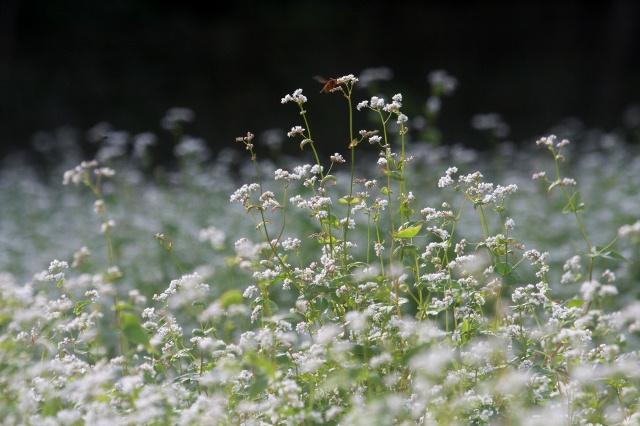 蜂1 (640x426)