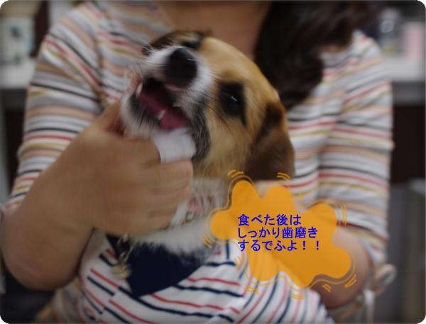2012ウチの子記念03