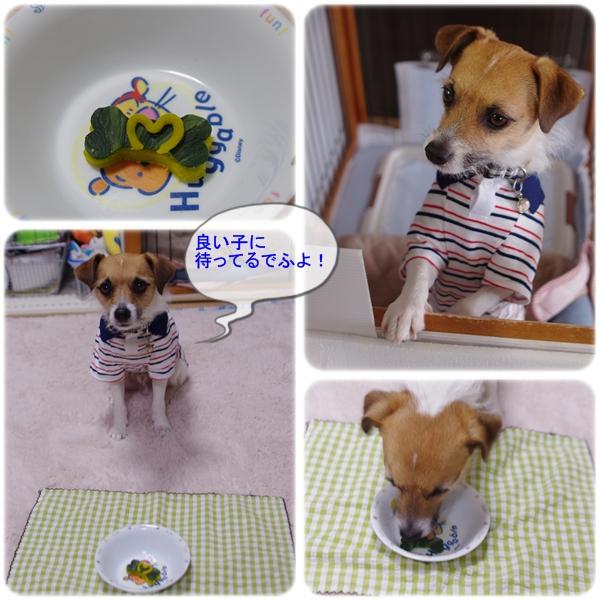 2012ウチの子記念02