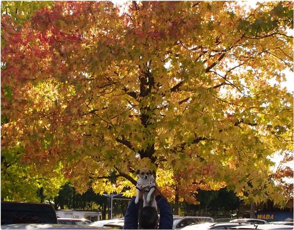 秋の色合い04