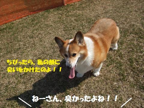 003_convert_20130310042544.jpg