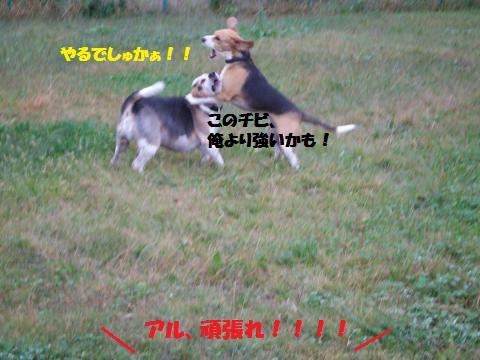 003_convert_20141123105957.jpg