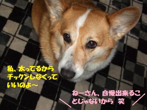 006_convert_20130404232147.jpg