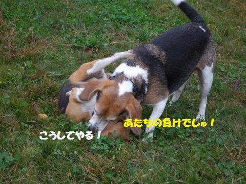 007_convert_20141123110053.jpg