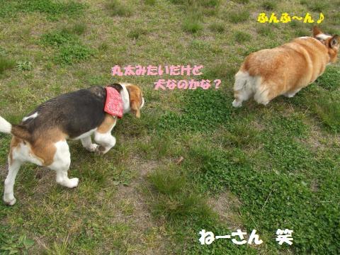 013_convert_20130420060751.jpg