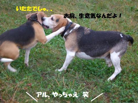 014_convert_20141123105852.jpg
